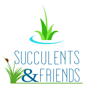 Succulents & Friends