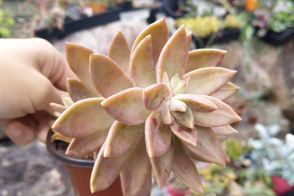 23 Succulents & Friends - Succulents December 2019