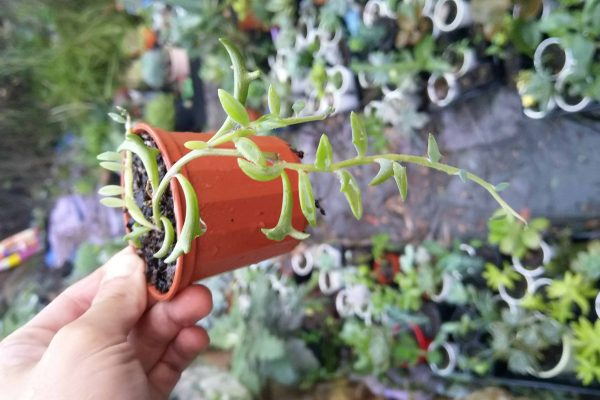 68 Succulents & Friends - Succulents December 2019