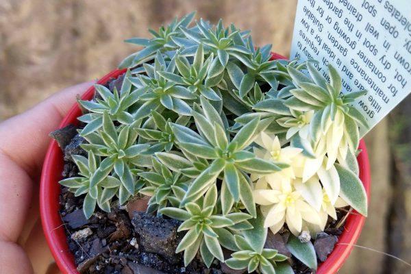 80 Succulents & Friends - Succulents December 2019