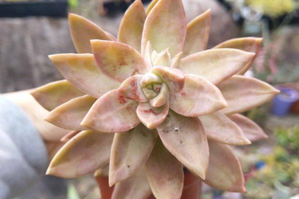 Succulents & Friends - Succulents November 2019 7