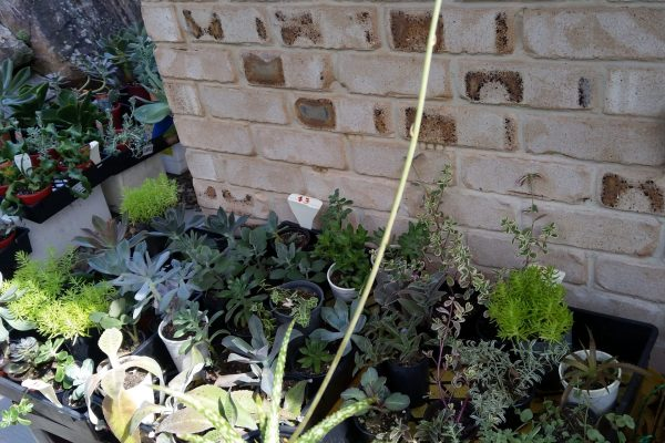 IMG_20200229_144432 - Succulents - Succulents & Friends - May 2020