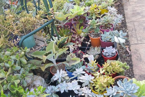 Succulents & Friends - We're Open - Succulents for Sale - May 2020