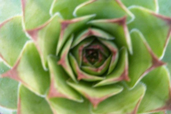 Succulent Nursery - Succulents & Friends - January 2021IMG_20210113_083937