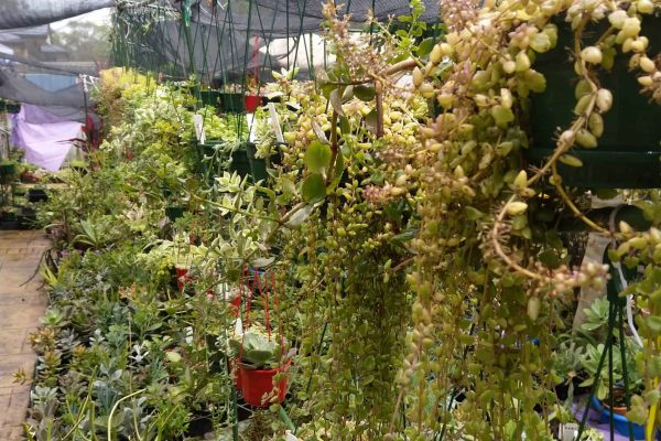 Succulents for sale in Brisbane - March 2021 - Succulents & Friends - IMG_20210219_111443