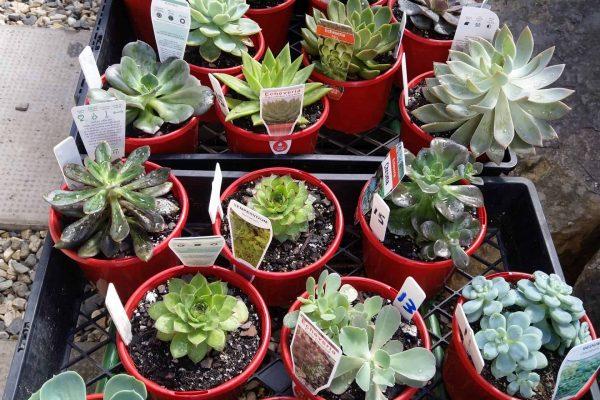 Succulents in Brisbane - IMG_20210327_100324 - March 2021 - Succulents & Friends
