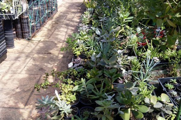 Succulents in Brisbane - IMG_20210327_100345 - March 2021 - Succulents & Friends