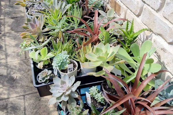 Succulents in Brisbane - IMG_20210327_100402 - March 2021 - Succulents & Friends