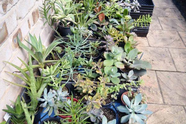 Succulents in Brisbane - IMG_20210327_100447 - March 2021 - Succulents & Friends